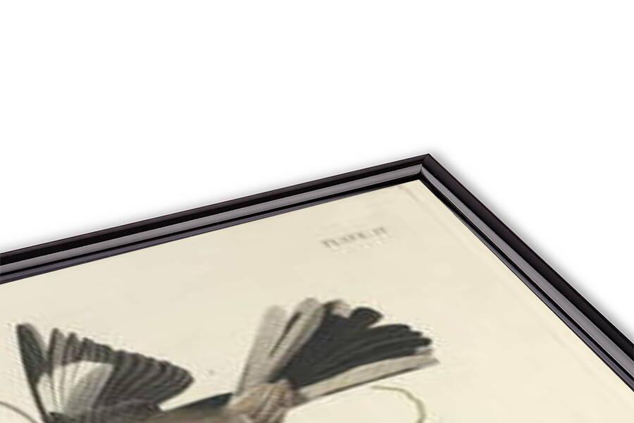 Fine Art Print  The Mocking Bird, 1827