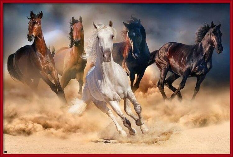 Horses – Five horses Poster