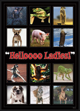 Hellooo ladies ! - montage Poster
