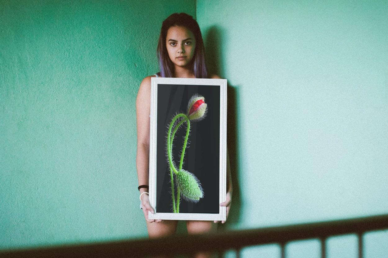 Art Photography Notocactus scopa