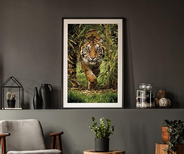 Canvas Print Sunset Lioness