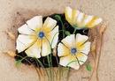 Anemone in frame