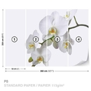 Flowers Orchids Nature White